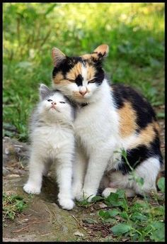 Cute But Deadly Animals Videos, Cute Cat Names With L their Cute Cat Names In Hi… Cute But Deadly Animals Videos, Cute Cat Names With L their Cute Cat Names In Hindi; Cute Cat Jokes Gif upon Cute Kittens Hd Photos Cute Cats And Kittens, I Love Cats, Crazy Cats, Kittens Cutest, Ragdoll Kittens, Tabby Cats, Funny Kittens, Bengal Cats, Pretty Cats