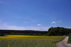 Blühende #Rapsfelder wohin das Auge reicht - der #Frühling bei #München ist einfach herrlich