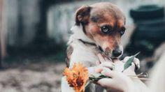 cane timido #cani #cuccioli #dogs #amorea4zampe