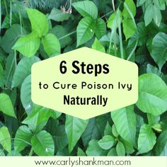 Use this natural and holistic poison ivy treatment to heal your rash quickly, and without the use of chemicals! CLICK HERE