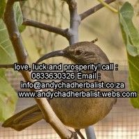 Lover spell caster in alberton Love Spell Caster, Psychic Readings, Love Spells, Self Confidence, Feel Better, Spelling, Compliments, Attraction, Improve Yourself