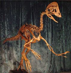 Scientists found fossil specimens of the new species in in a sedimentary rock layer called the Hell Creek Formation in North and South Dakota, which helped inspire the nickname. Scientists Discover New Dinosaur Species Dubbed 'Chicken From Hell' (PHOTO) Dinosaur Skeleton, Dinosaur Fossils, Extinct Animals, Prehistoric Creatures, Vertebrates, Fauna, T Rex, Natural History, Charles Darwin