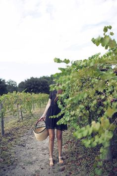 Picking orchards -- Top 5 Pins: Labor Day Weekend Getaways | HelloSociety Blog