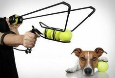 Give your #dog the #workout of a lifetime! #tennis #ball #pet www.smartdeploy.com #innovate