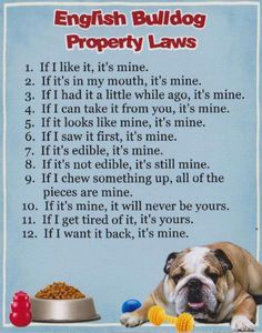 English Bulldog House Rules - I think this goes for my French Bulldog too.