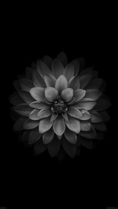 THANKS FOR FOLLOWING ME! #100 Grey flower wallpaper #monochrome