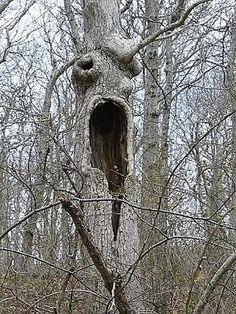 the screaming tree, Hither Hills State Park, Montauk NY