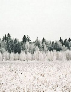 Snowy Forest :: House of Valentina