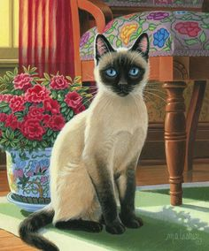Siamese Cat Gallery - Cat's Nine Lives Siamese Cats, Cats And Kittens, Ragdoll Kittens, Tabby Cats, Funny Kittens, Bengal Cats, White Kittens, Bengal Tiger, Black Cats