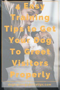 Beagles, Chihuahuas, Yorkies, Pugs, Pitbulls, Dog Love, Puppy Love, Dog Obedience Classes, Dog Clicker Training