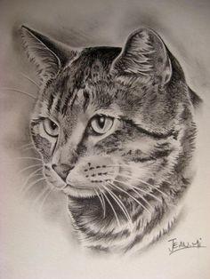 Regalar un retrato es regalar emociones. Pencil Drawings Of Animals, Animal Sketches, Art Sketches, Art Drawings, Tattoo Gato, Cat Tattoo, Simple Cat Drawing, Drawing Ideas, Ocicat