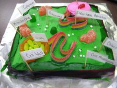 Animal and Plant Cells Project - 30 Animal and Plant Cells Project , Plant and Animal Cell Model Cakes Cakes 3d Plant Cell, Plant Cell Model, Plant And Animal Cells, 3d Cell, Cell City Project, Cell Model Project, Animal Cell Project, Edible Cell Project, Plant Cell Project