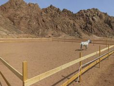Picture of The Arena by the stable from sayed sharm el sheikh in