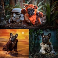 It's May Fourth! Check out @kabelphoto for #starwarsday  And Keep an eye on @obiwan_thefrenchie to be the first to see his #maythefourthbewithyou #starwars themed photo! 😎 #maythefourthbewithyou #starwarsday #maythefourth #maythe4th #maytheforcebewithyou #theforce #returnofthejedi #starwarsfanart #chimeralighting #perfectlighting #starwarsdog