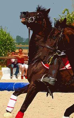 The horrors of equestrian sport: photogallery. (с) Nevzorov Haute Ecole