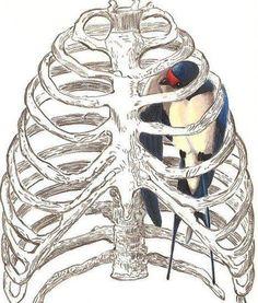 Blue bird heart