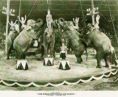 """This is the Ringling Bros. and Barnum & Bailey circus elephants under the direction of Arky Scott during the filming of the Cecil B. DeMille's classic movie """"the Greatest Show on Earth."""" Pt Barnum Circus, Ringling Brothers Circus, Barnum Bailey Circus, Circus Train, Circus Theme, Circus Room, Circus Pictures, Circus Maximus, Human Oddities"""