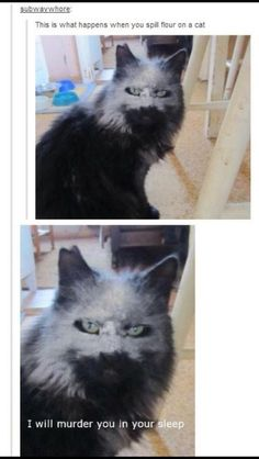 21 Times Tumblr Told The Truth About Cats. And this is why I LOVE cats!! So funny!