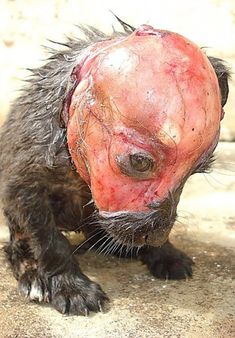 Petition: Puppy skinned alive and tossed in a garbage can to die deserves justice!