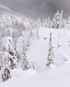 """3,277 Likes, 18 Comments - Destination British Columbia (@hellobc) on Instagram: """"Photo from BC #guestagrammer @steverobert1: """"Storm skiing at Kootenay Pass during one of the best…"""""""