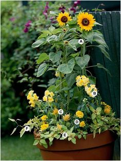 Container Gardening 101 Container Gardens: Bright shades of yellow catch the eye, even across the yard. Here, golden sunflowers with their big, bold blooms make an impact. This cheery container grows best in full sun. Lawn And Garden, Garden Pots, Marigolds In Garden, Side Garden, Container Gardening, Gardening Tips, Organic Gardening, Full Sun Container Plants, Gardening Quotes