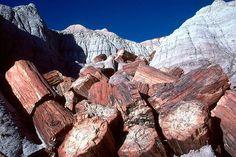 "Blue Mesa Log Tumble ""Petrified wood found at Petrified Forest National Park. Credit T. Scott Williams/NPS""."