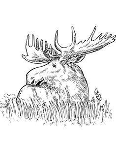 Moose Sitting In A Grass Coloring Page