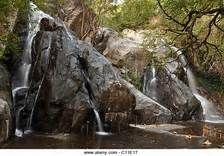 kutralam waterfalls - Yahoo Image Search Results Yahoo Images, Waterfalls, Image Search, Plants, Plant, Planets, Falling Waters, Waterfall