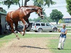 Resultado de imagen para stretching un horses