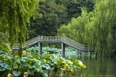 Image detail for -Lotus Stirred by Breeze in Quyuan Garden in West Lake in Hangzhou, Zhejiang Province
