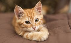 Adorable kitten to help you focus! Just look at them #wow #cat #study