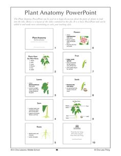 flower lesson plans | Home > Products > 6-9 Plant Anatomy, Lesson Plan