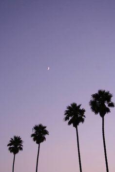 bAmo gli alberi. Sono come noi. Radici per terra e testa verso il cielo… (Erri De Luca)