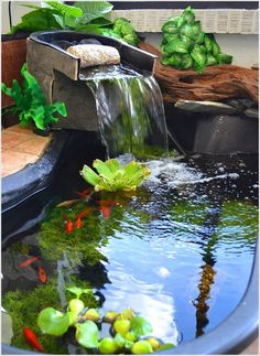 Small Garden Ideas That Will Beautify Your Green World [Backyard Aquariums Included]outdoor fish ponds homesthetics Outdoor Fish Ponds, Indoor Pond, Ponds Backyard, Koi Ponds, Backyard Ideas, Outdoor Fish Tank, Indoor Outdoor, Backyard Waterfalls, Outdoor Decor