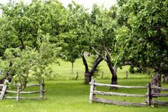 Fencing & look & feel for the orchard