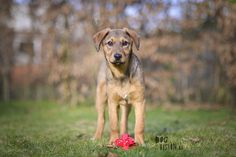 Oona | mutt/ rescue dog from Bosnia | www.DOGvision.be | dog photography