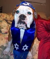 This dog is really getting in the Hannukah spirit!