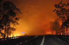 In this photo provided by the New South Wales Rural Fire Service a wildfire near Deans Gap, Australia, crosses the Princes Highway Tuesday, Jan. Dust Storm, Australian Bush, Extreme Weather, Severe Weather, Natural Disasters, Tasmania, Western Australia, Climate Change, National Parks