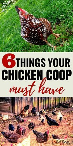 Chicken Coops: Give your hens everything they need. Make sure your chicken coop … Chicken Coops: Give your hens everything they need. Make sure your chicken coop has these 6 things for happy healthy hens! Chicken Coop Designs, Small Chicken Coops, Cheap Chicken Coops, Chicken Coup, Portable Chicken Coop, Best Chicken Coop, Backyard Chicken Coops, Building A Chicken Coop, Chicken Runs