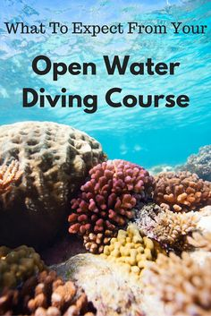 Spectacular Dive Sites You Have to See to Believe Have you ever thought about learning to scuba dive but not sure what to expect from the open water course? This guide will give you a bit more information!