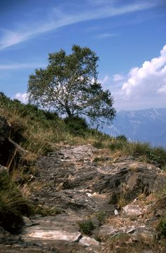 https://flic.kr/p/JKizf4   Monti di Ronco, Ticino, Svizzera