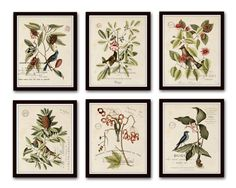 VINTAGE BIRD AND BOTANICAL PRINT SET NO. 2 These vintage botanical bird and botanical illustrations have been been digitally enhanced and restored to bring out their depth of color and detail. The ima