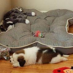 Prawdziwy łóżkoholik wyśpi się nawet na podłodze ;)