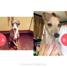 Wishbone App, Would You Rather, Kermit, Marbles, Peach, Dogs, Animals, Peaches, Animaux