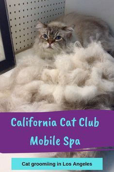 California Cat Club Is A Full Service State Of The Art Mobile Spa It Comes Equipped With Air Conditioning And Is Fully Self Suffi Mobile Spa Cat Grooming Cats