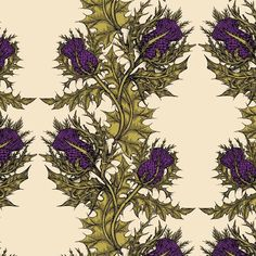 Timorous+Beasties+Grand+Thistle+Hand-Print+Wallpaper+-+This+grand+thistle+print+from+Timorous+Beasties+is+hand+printed+and+features+one+of+their+signature+motifs+with+beautiful+range+of+colours+and+the+iconic+TB+thistle Pattern+repeat:+72.5cm+(style+half+Drop/+quarter+drop/+straight+over) Please+note+price+is+per+10m+roll.