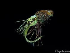 The One Fly | It's The One Fly in which we put all our confidence