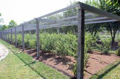 This is my new netted blueberry pergola. I'll show you how it was constructed. This is my new netted blueberry pergola. I'll show you how it was constructed. Potager Garden, Veg Garden, Vegetable Garden Design, Fruit Garden, Edible Garden, Garden Beds, Garden Landscaping, Farm Gardens, Outdoor Gardens
