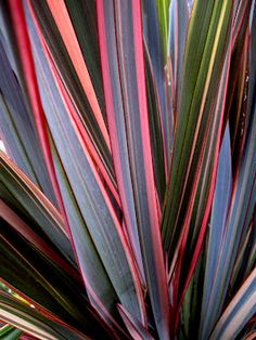New Zealand Flax (by DEL QUILTS)