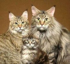 Family Portrait! I would like to have a family like that of cats! Gorgeous.